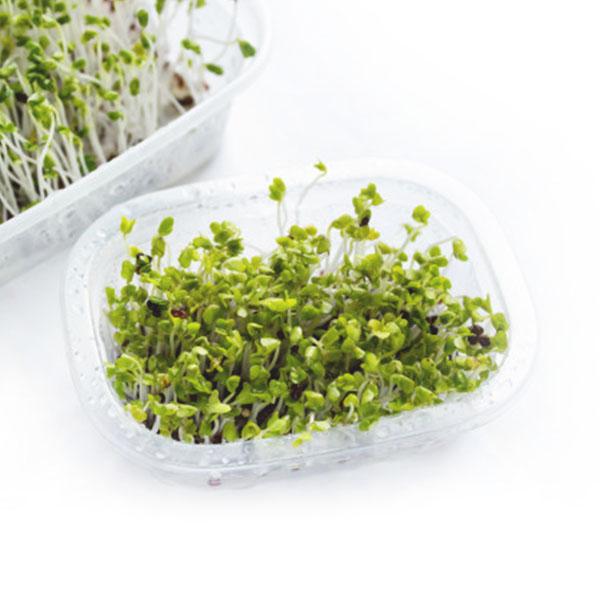 Kiełki brokuła 250g