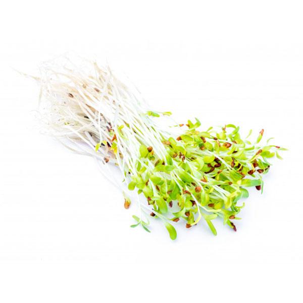 Kiełki lucerny 250g